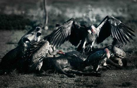 , 'Vultures,' , HG Contemporary
