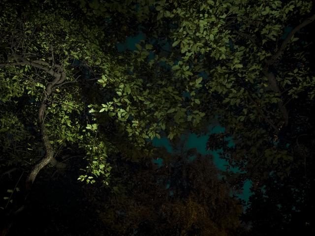Anna Beeke, 'Midnight in the Garden #1', 2015, Uprise Art