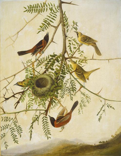Joseph Bartholomew Kidd after John James Audubon, 'Orchard Oriole', 1830/1832, Painting, Pencil and oil on canvas, National Gallery of Art, Washington, D.C.
