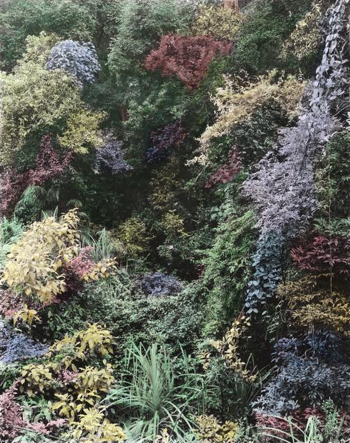 Vasantha Yogananthan, 'Magic Jungle', 2016, The Photographers' Gallery | Print Sales