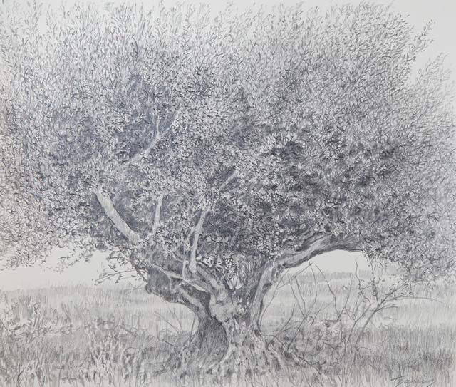George Tzannes, 'Olive Tree', 2007, Arco Gallery