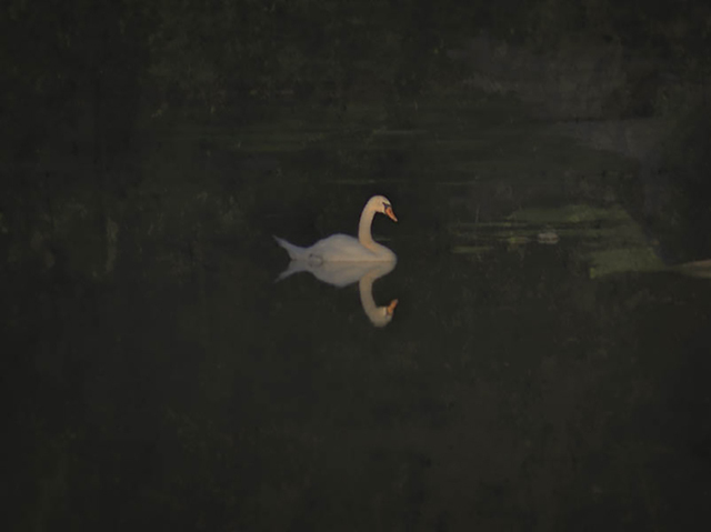 , 'Lancaster Swan ,' 2016, David Lusk Gallery