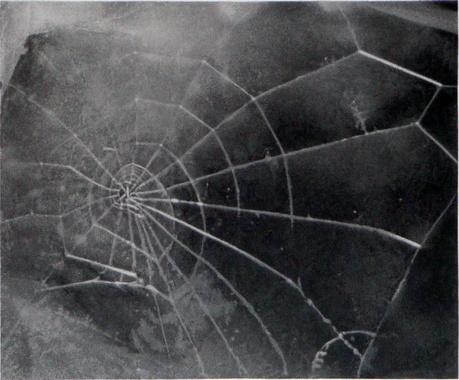 , 'Spider-Web,' 2009, inde/jacobs