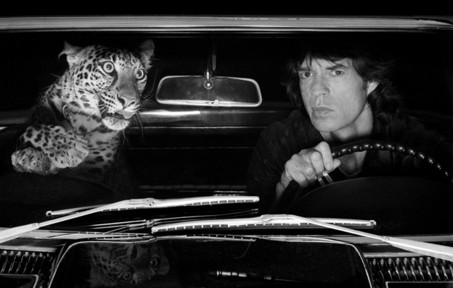 Albert Watson, 'Mick Jagger with Leopard', 1992, CAMERA WORK