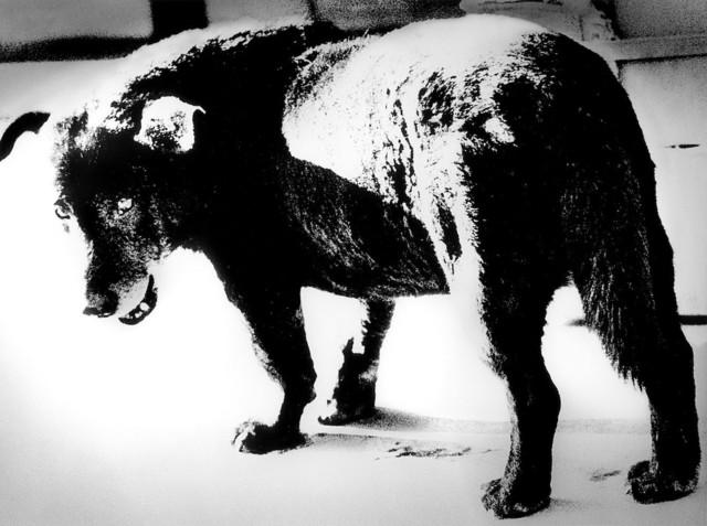 ", 'Dog Town from ""Searching Journeys 3"" Misawa,' 1971-printed later, Akio Nagasawa Gallery"