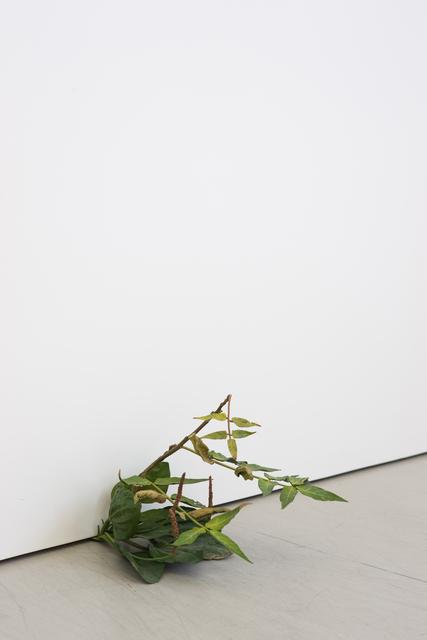 , 'Weed 76-08,' 2008, Andréhn-Schiptjenko