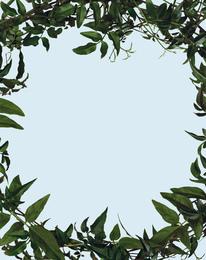 Leaf Frame (Small Version)