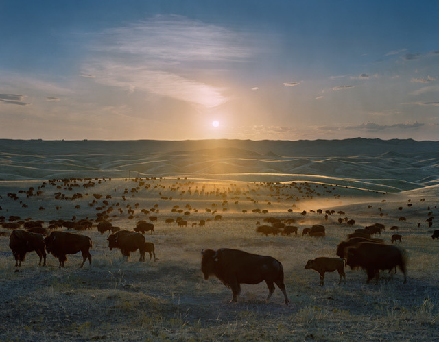 , 'Flying H Buffalo Ranch, Walworth County, South Dakota,' 2006, Yancey Richardson Gallery