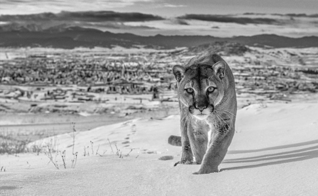 David Yarrow, 'Frontier Town, Butte, Montana, USA', 2020, Photography, Archival Pigment Photograph, Holden Luntz Gallery