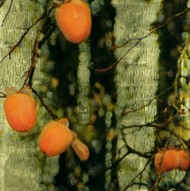 Susan Goldsmith, 'Persimmon - Pengrove 1', 2010, Painting, Gold Leaf with Pigment Print, Oil Pastel, Oil Paint and Resin on Panel, Gallery Henoch