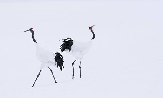 David Yarrow, 'Hokkaido', 2017, Photography, Archival Pigment Print, Hilton Asmus