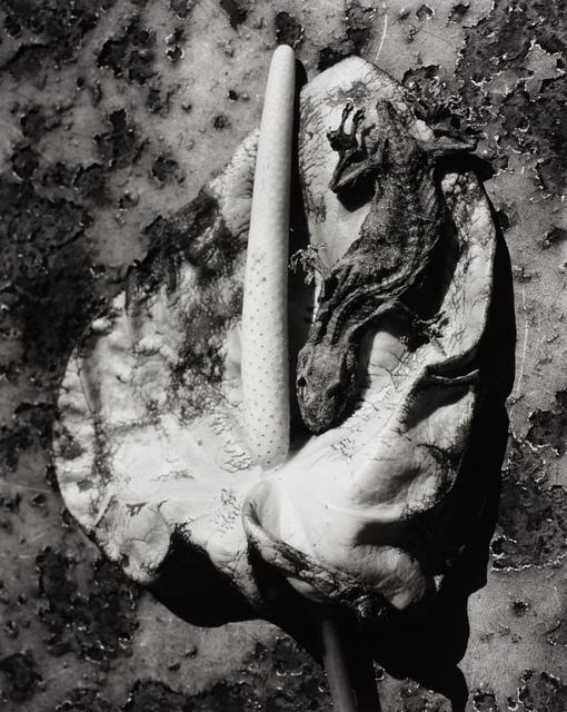 Nobuyoshi Araki, 'Untitled, Japan', ca. 2000, Ostlicht. Gallery for Photography