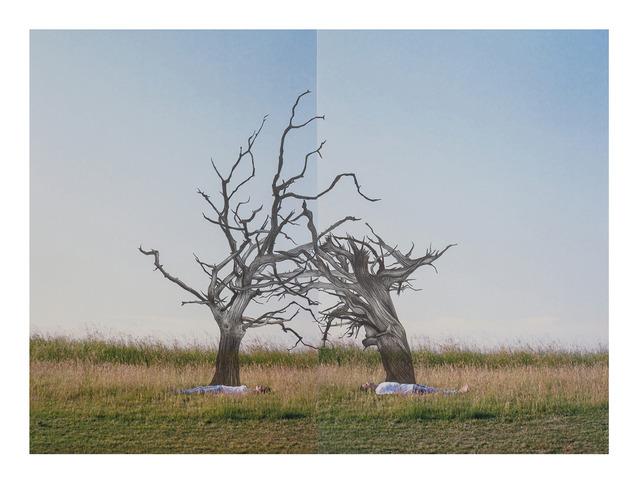, 'duas árvores mortas,' 2013, Amarelonegro Arte Contemporânea
