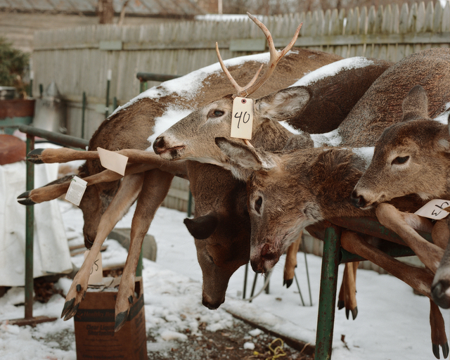 , 'Deer Carcasses, Stockport, New York, 2016,' 2016, Tracey Morgan Gallery