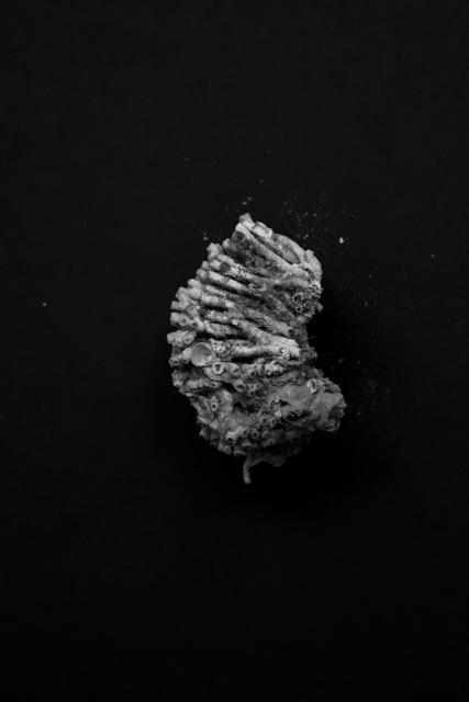 , 'Sea in Me #4,' 2015, Galerija Fotografija
