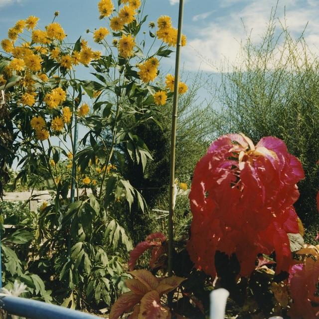 , 'Untitled ,' 2001, MIYAKO YOSHINAGA
