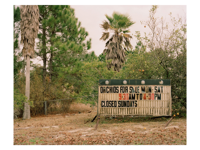 , 'Orchid World, Florida,' 2011, Francesca Maffeo Gallery