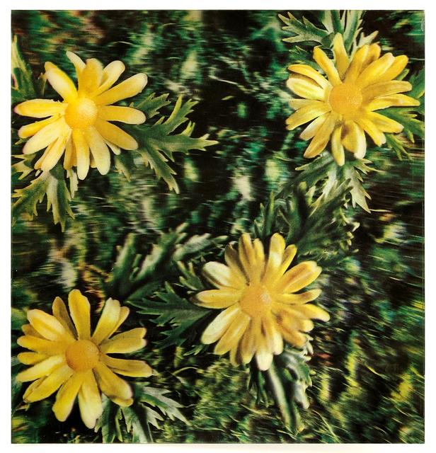 Andy Warhol, 'Rain and Flowers', 1970, Joseph K. Levene Fine Art, Ltd.