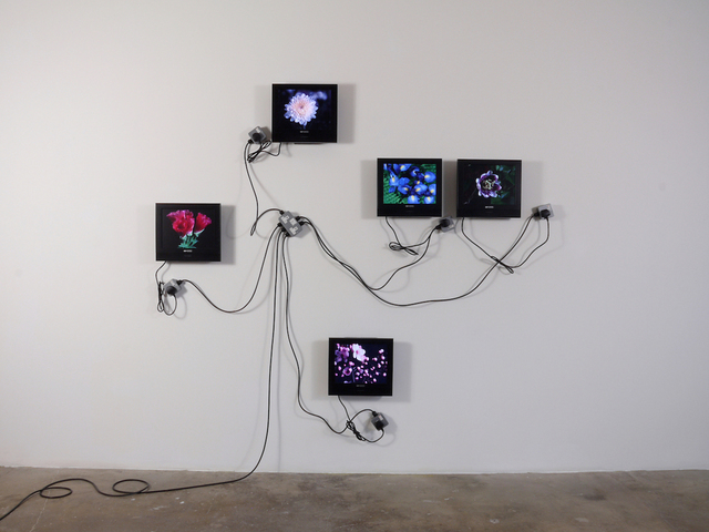, 'Wallflower,' 2008, Oliver Sears Gallery