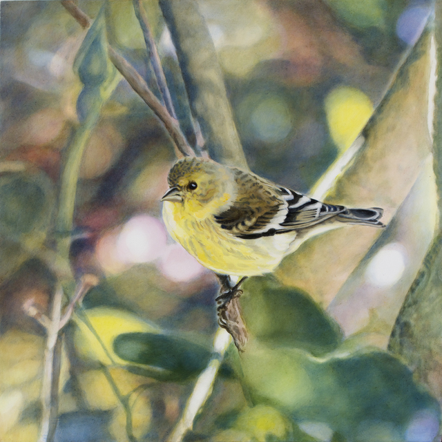 , 'Goldfinch VI,' , Gail Severn Gallery