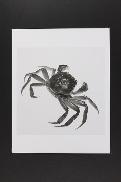 , 'Crab,' 2014, Gallery LVS