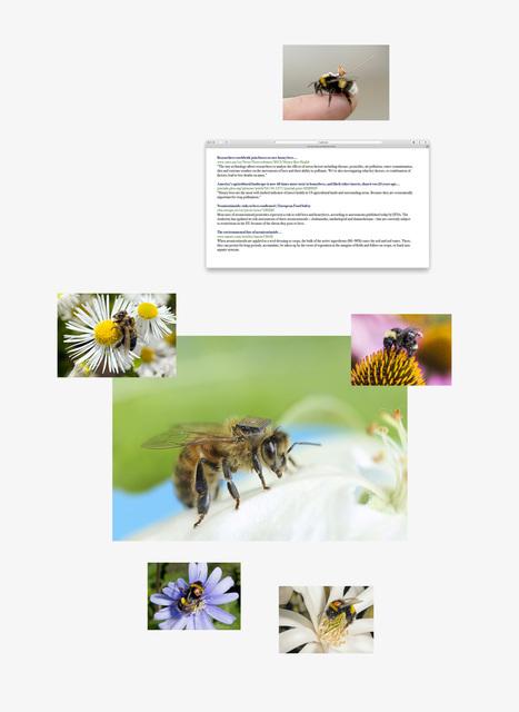 , 'Tracking bees,' 2019, Helsinki Contemporary