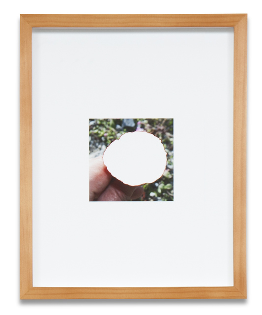 , 'Plant Cut-Out #2,' 2013, Kohn Gallery