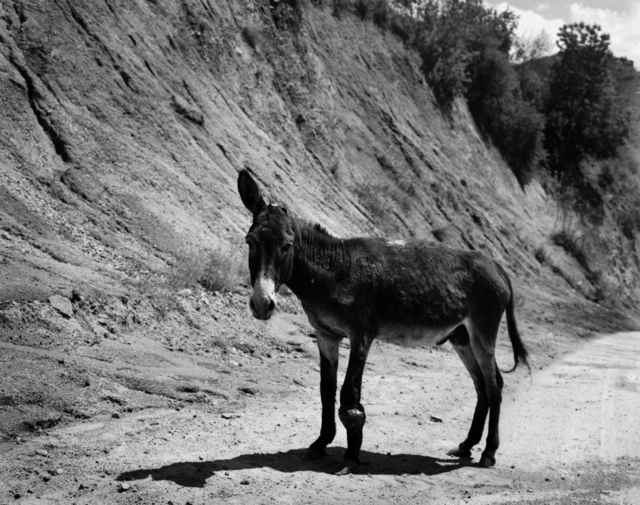 , 'One Ear Donkey,' 2013, RaebervonStenglin