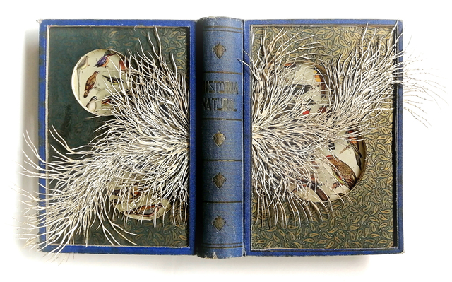 Barbara Wildenboer, 'Historia Naturel', 2019, Seager Gray Gallery