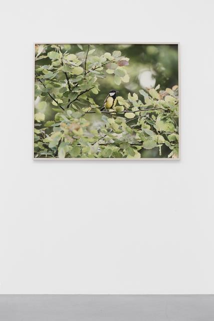 , 'Bird,' 2015, Galerie Nordenhake