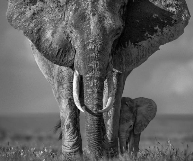David Yarrow, 'The Walk of Life', 2017, Photography, Archival pigment print, Maddox Gallery
