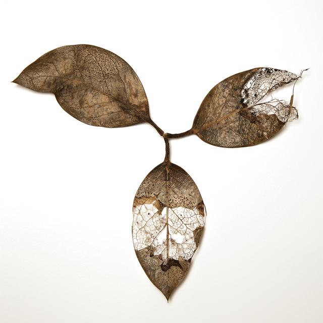 , 'Fading Into Glory,' , Janet Rady Fine Art