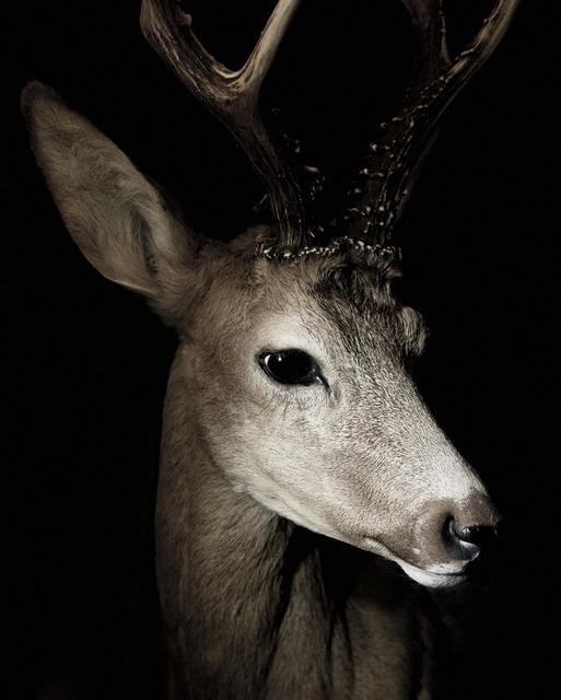 , 'Deer,' 2012-2015, ILEX Gallery