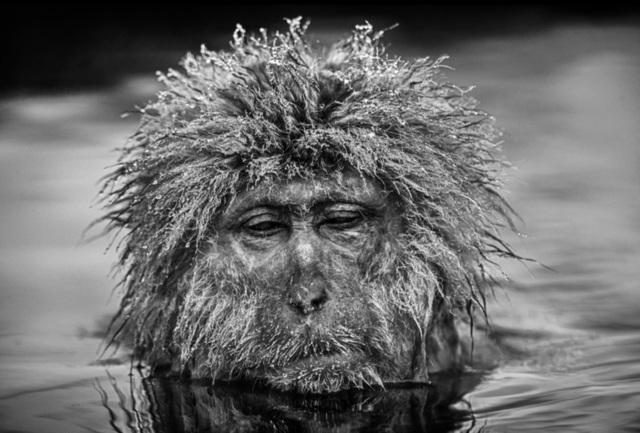 David Yarrow, 'Miserable Monkey', 2013, Hilton Asmus