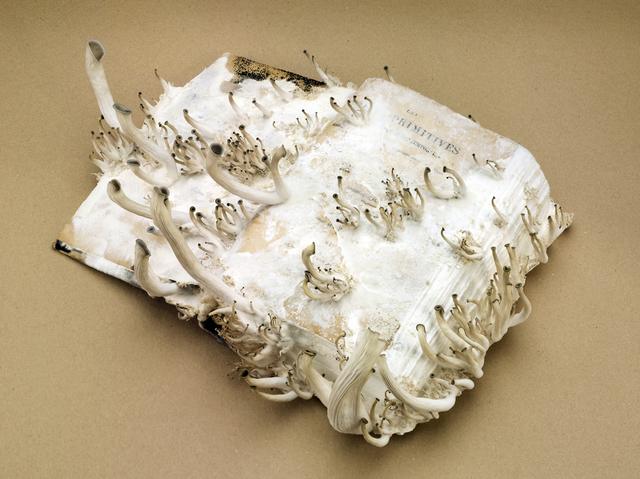 , 'Les Idées Primitives,' 2015, Maurits van de Laar