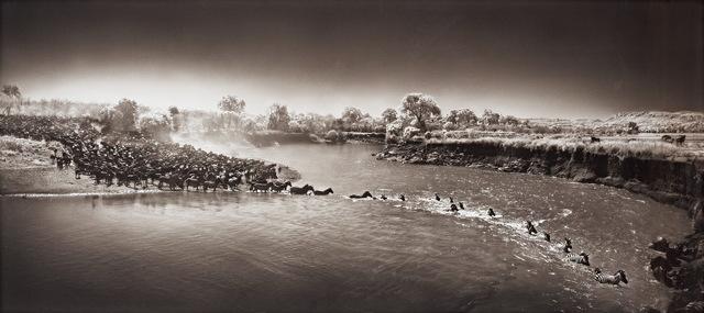 Nick Brandt, 'Masai Mara, Zebra Crossing River', 2006, Le Salon Vert