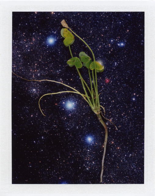 , 'Local Plants #65,' 2013, Wirtz Art