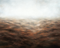 , 'Salmon Rose,' 2014, Sears-Peyton Gallery