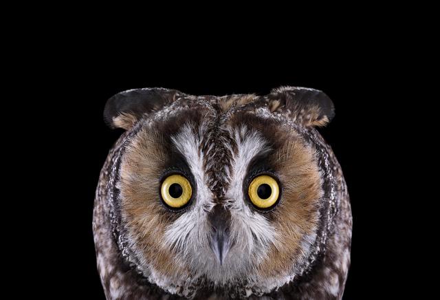 Brad Wilson, 'Long Eared Owl #1, Espanola, NM', 2011, photo-eye Gallery