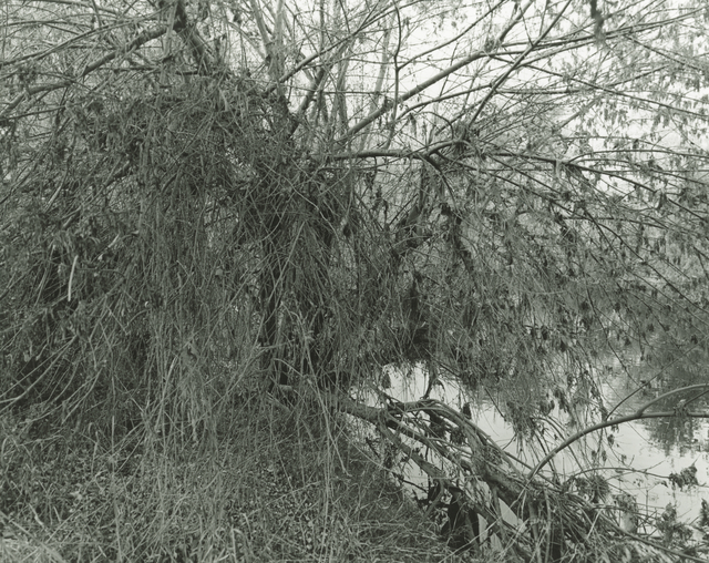 Mark Ruwedel, 'LA River/Sepulveda Basin #80', 2018, Photography, Gelatin silver print dry-mounted to archival board, Gallery Luisotti