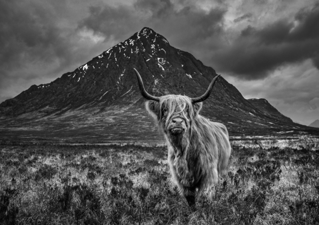 David Yarrow, 'Scotland', 2019, Isabella Garrucho Fine Art