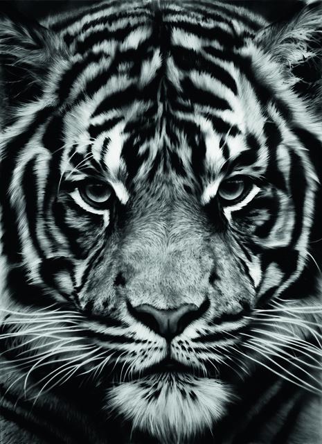 , 'Untitled (Tiger),' 2012, Galerie Raphael