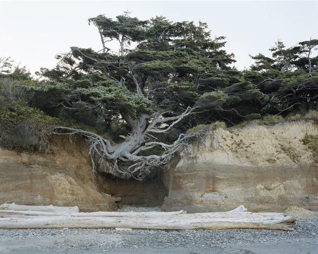 Mitch Epstein, 'Kalaloch, Olympic National Park, Washington 2017', 2017, McEvoy Foundation for the Arts