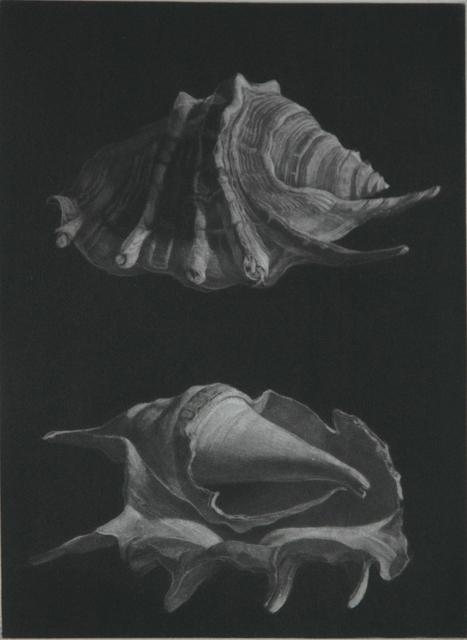 , 'Araignée,' 2015, Emanuel von Baeyer