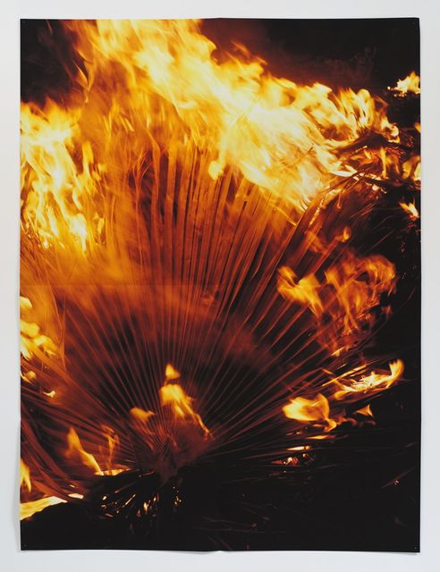 , '(Burning Palm Fronds),' 2010, Xavier Hufkens