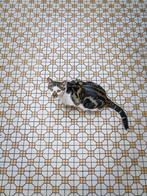 , 'HONG KONG SHOP CATS #34,' 2015, Blue Lotus Gallery