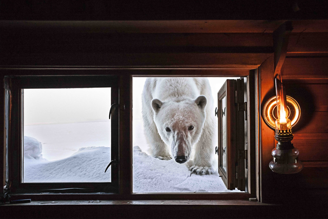 , 'Face to Face,' , Paul Nicklen Gallery