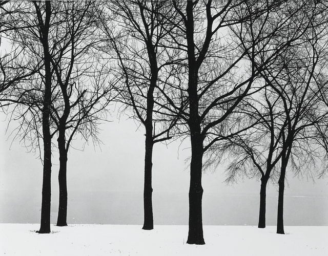 Harry Callahan, 'Chicago (Trees in Snow)', Sotheby's