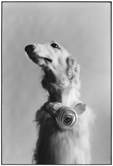 , '15. New York City. (Dog portrait),' 1999, f22 foto space