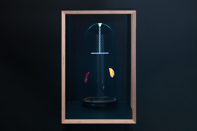 , 'Flutter Hologram: Pendulum,' 2017, Priveekollektie Contemporary Art | Design